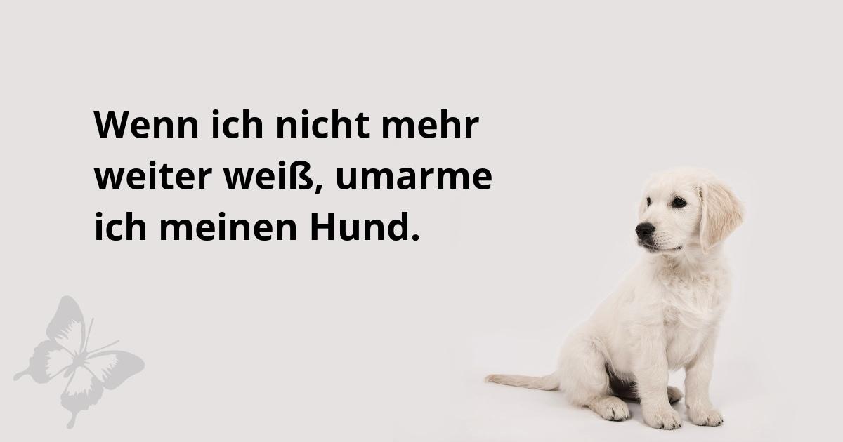 Hund, kleiner Rottweiler, Spruch